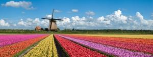 Netherlands_higher_ed
