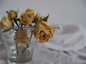 dying_flowers____by_ladybutterly83